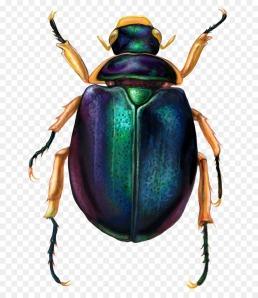 scarabeo2
